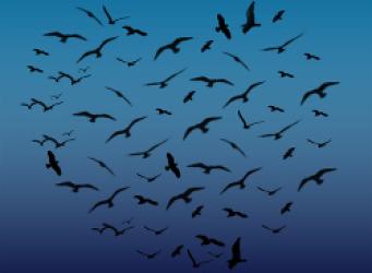 birds flying in a heart shape