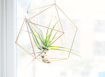 do-it-yourself plant growing in a window