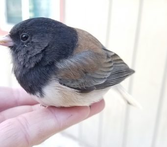 a_bird_in_the_hand